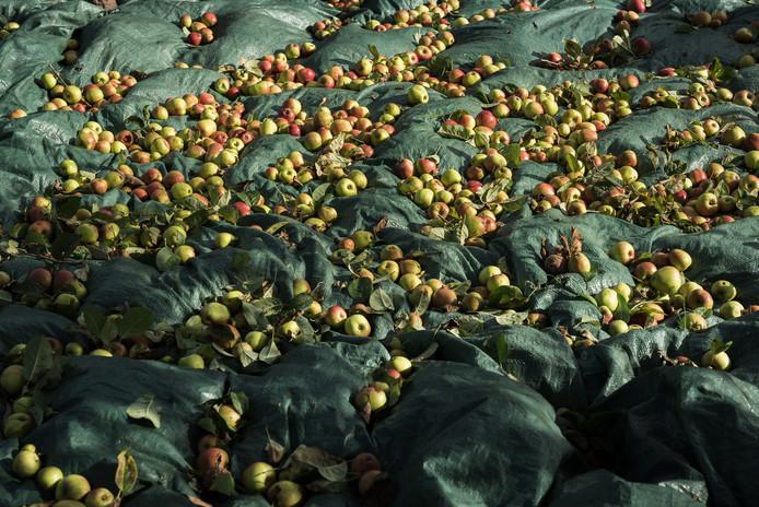 Autumn at Orchard Fields-3.jpg
