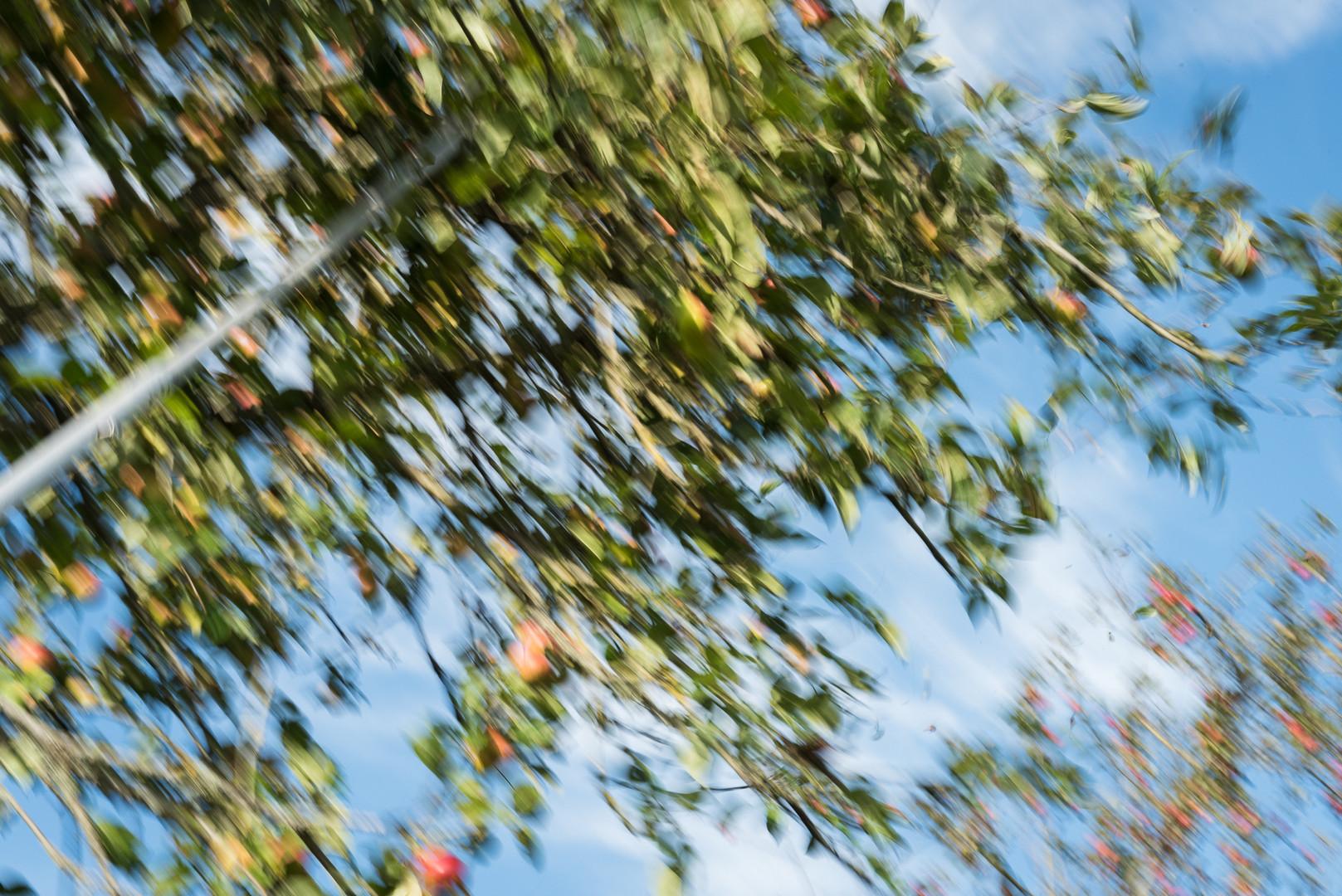 Autumn at Orchard Fields-2.jpg