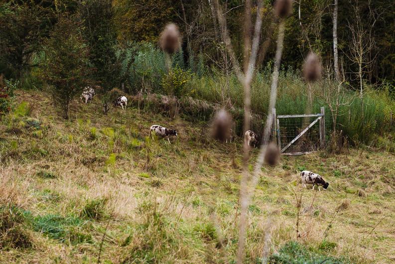 Autumn at Orchard Fields-122.jpg
