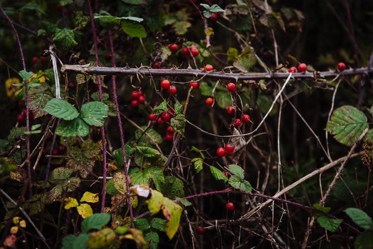 Autumn at Orchard Fields-124.jpg