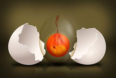 embryo-544192__480.jpg