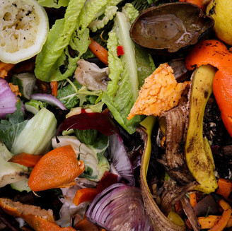 THE FOOD WASTE PROBLEM