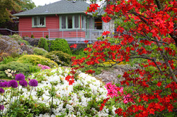 Teahouse with Red Rhododendrons