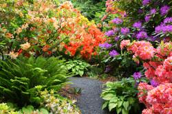 Garden Rhododendrons
