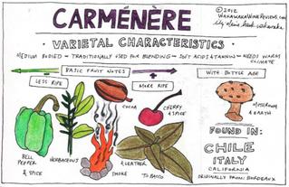 Carmenere, cépage emblématique du vin chilien!