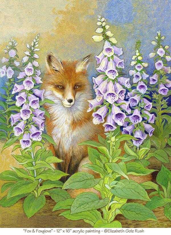 fox foxglove 72dpi.jpg