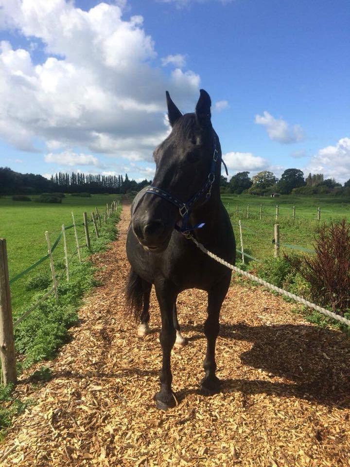 Tasha's pony.jpg