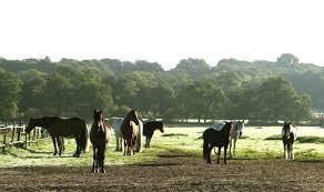 Herd shot.jpg
