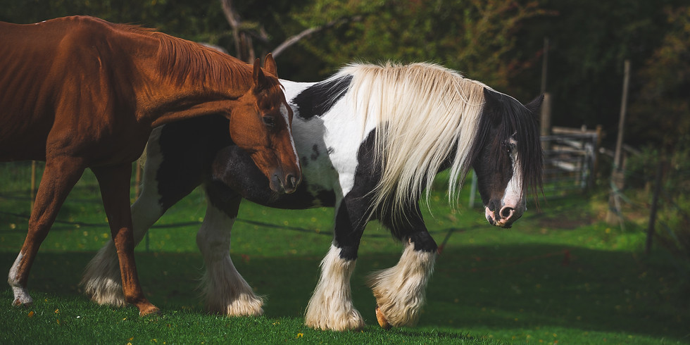 Equine Assisted Therapy: Skills & Practice