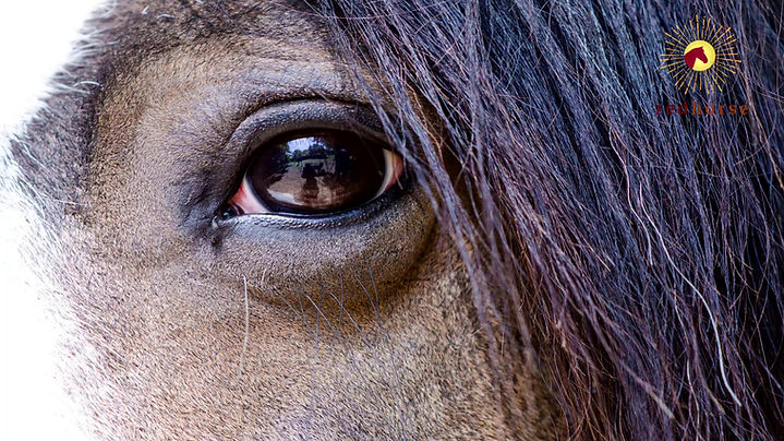 Introduction to Red Horse Foundation