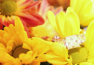 Engagement - Web-103.jpg