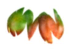 food, design, culinaire, couleurs, buffet, photographie , cuisine, art , comestible, personnalisé, toolsoffood, photo, fruits, book, livre, couleurs, peau, skin, cuisine art