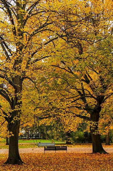 Hyde Park Broad Walk