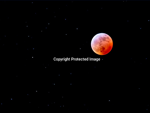 Blood Red Wolf Moon