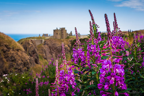 Dunnottar Castle with Flowers