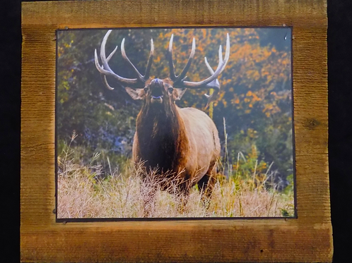 Fall Elk Picture Mounted on Wood Plaque