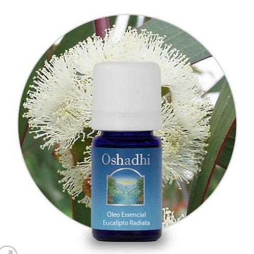 oleo essencial Eucalipto Radiata 5ml oshadhi