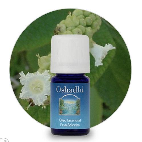 oleo essencial Erva Baleeira 5ml oshadhi
