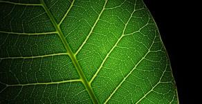 Curiosidades sobre plantas medicinais