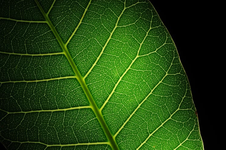 Folha, plantas medicinais