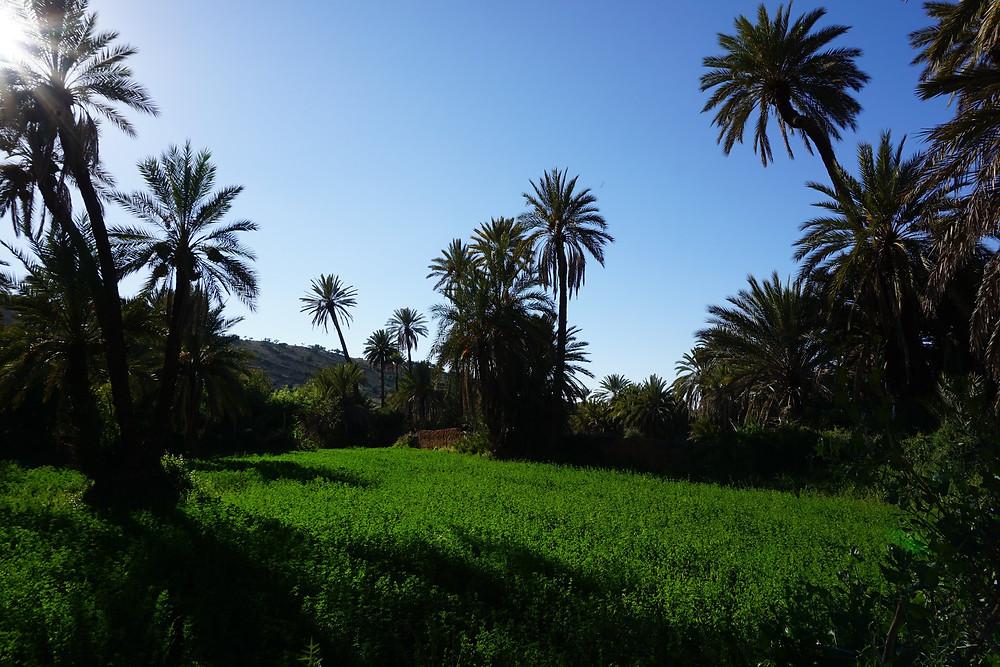 tiout taroudant morocco