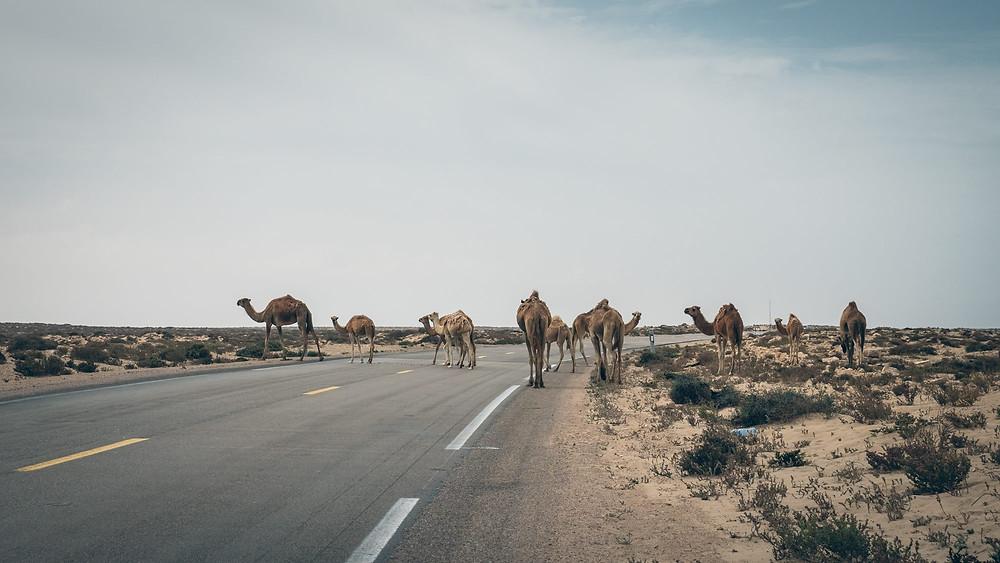 sidi ifni morocco