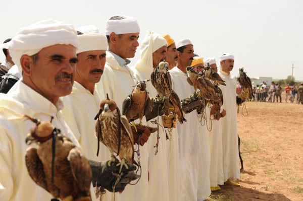 falconry el-jadida morocco