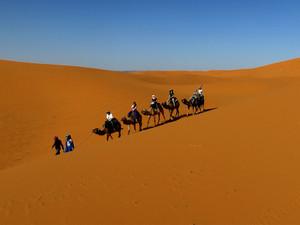 Explore the Moroccan Sahara Desert on the back of a Mehari camel