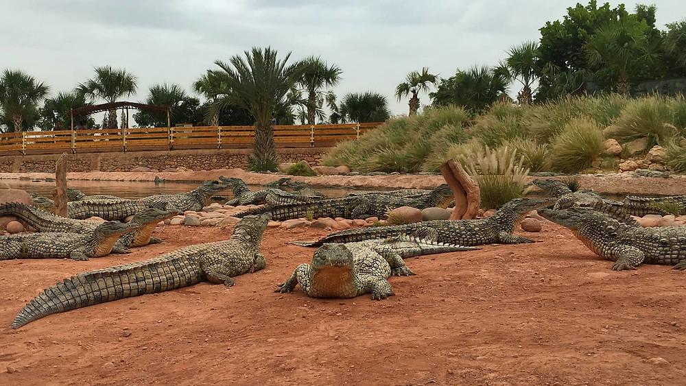 Crocoparc agadir morocco