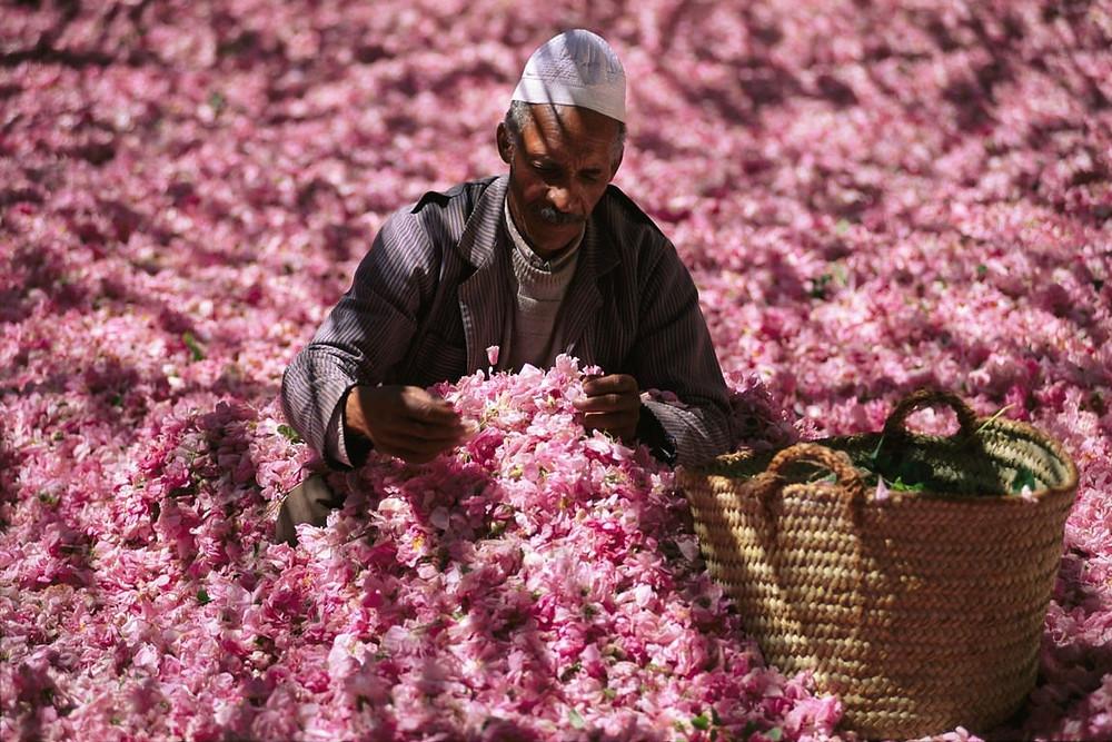 Kelaat M'Gouna, roses valley morocco
