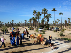 Palmeraie of Marrakech | A magical and astonishing palm oasis