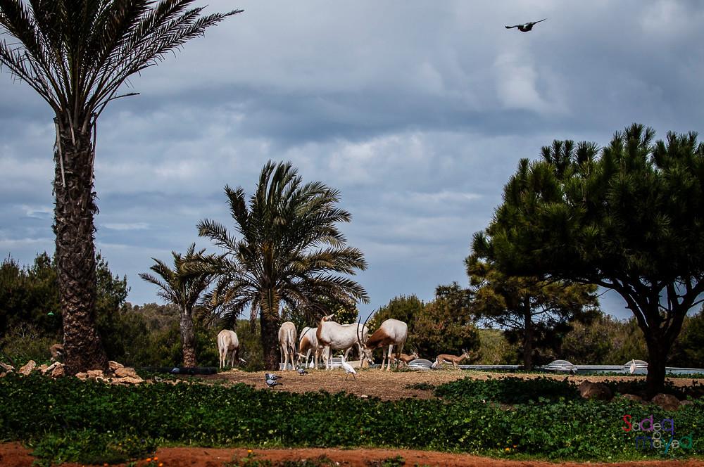 rabat zoo morocco