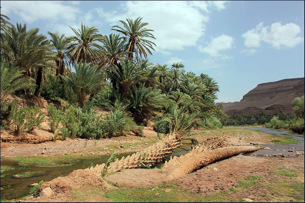 The Fint Oasis morocco