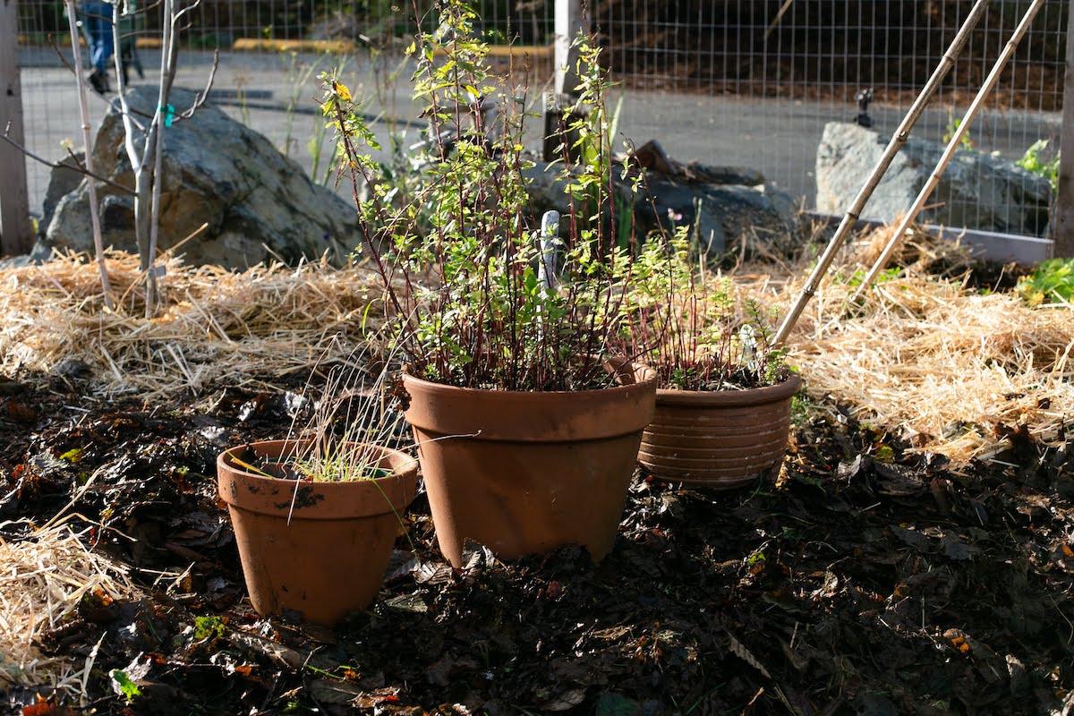 gareau- 20191124-community garden-3291.j
