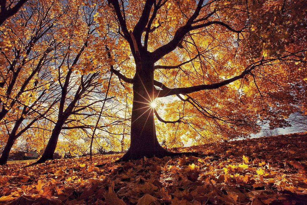 autumn-leaves-royalty-free-image-1594753784.jpeg