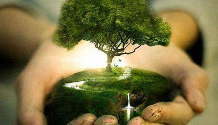 Save-trees.jpg