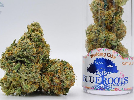 Blue Roots Cannabis: Potent Strains And Innovative Growing Techniques