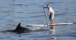 Rental Paddle board
