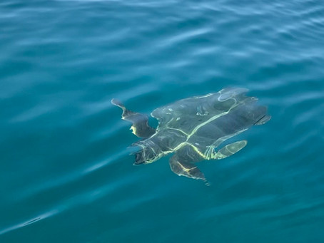 Reis mee naar Zakynthos en ontmoet de Caretta Caretta schildpad