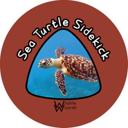 Sea turtle side kick.jpg