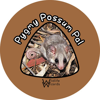 Pygmy Possum Pal.jpg
