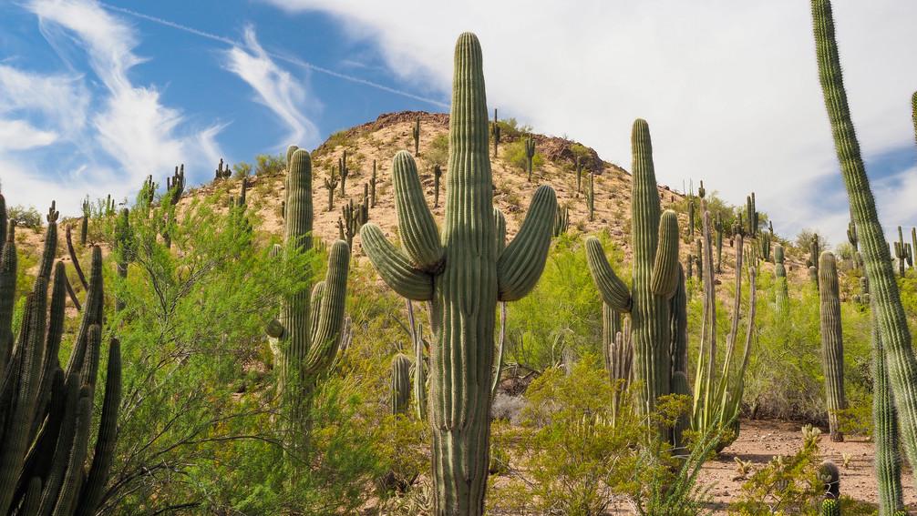 Bei Phoenix Arizona