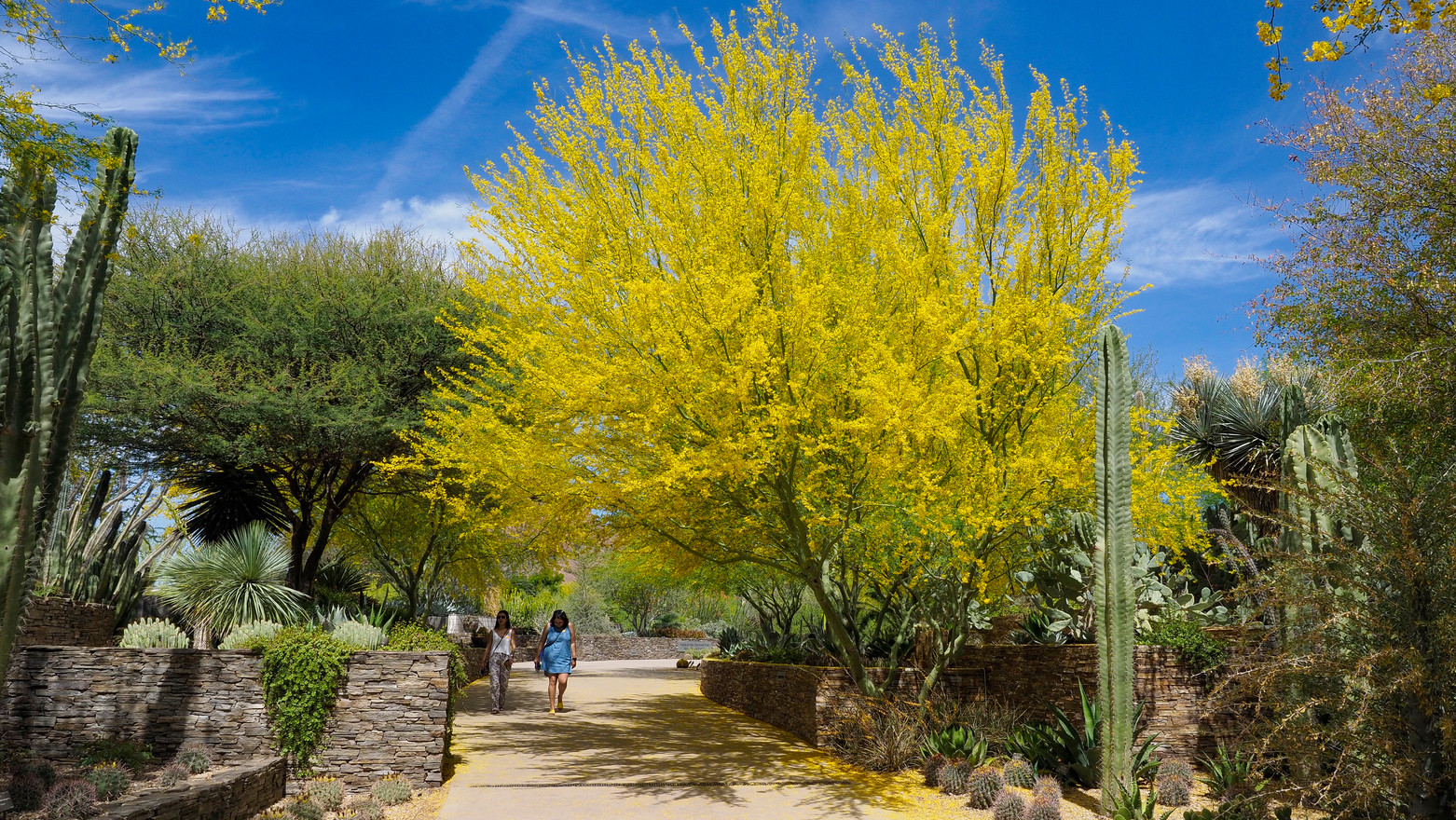 Bei Scottsdale Arizona