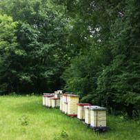 20150531_Hives in MS.jpg