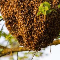 swarm-1.jpg