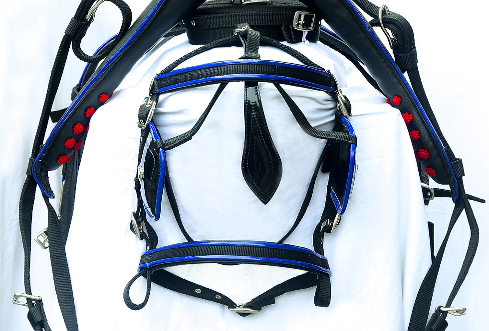WEBBING HARNESS TWO TONE FOR SINGLE HORSE, BLACK/BLUE