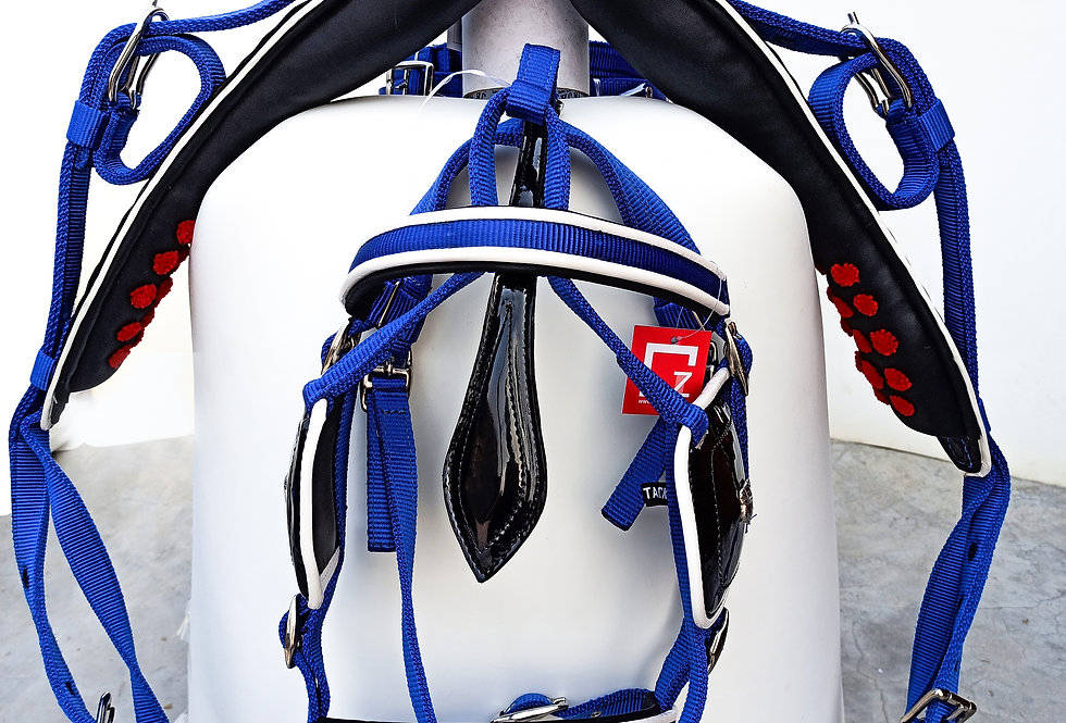 WEBBING HARNESS TWO TONE FOR SINGLE HORSE, BLUE/WHITE