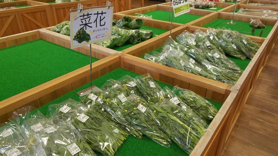 新鮮野菜がリーズナブルな価格で販売されています