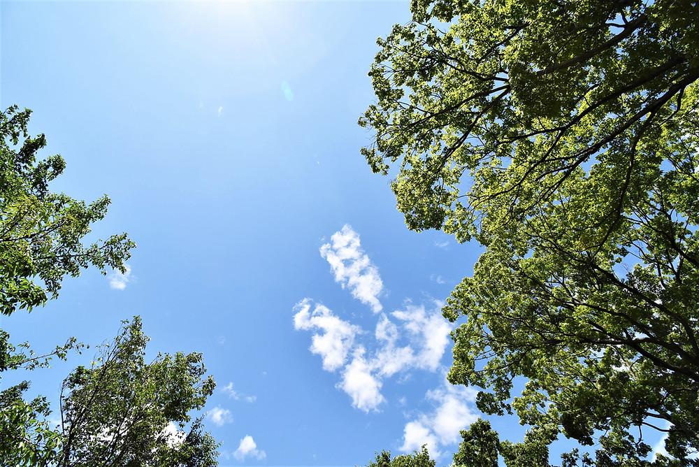 古墳の周りの木々の間から空を見上げると、悩みなんかなかったことにできちゃいます