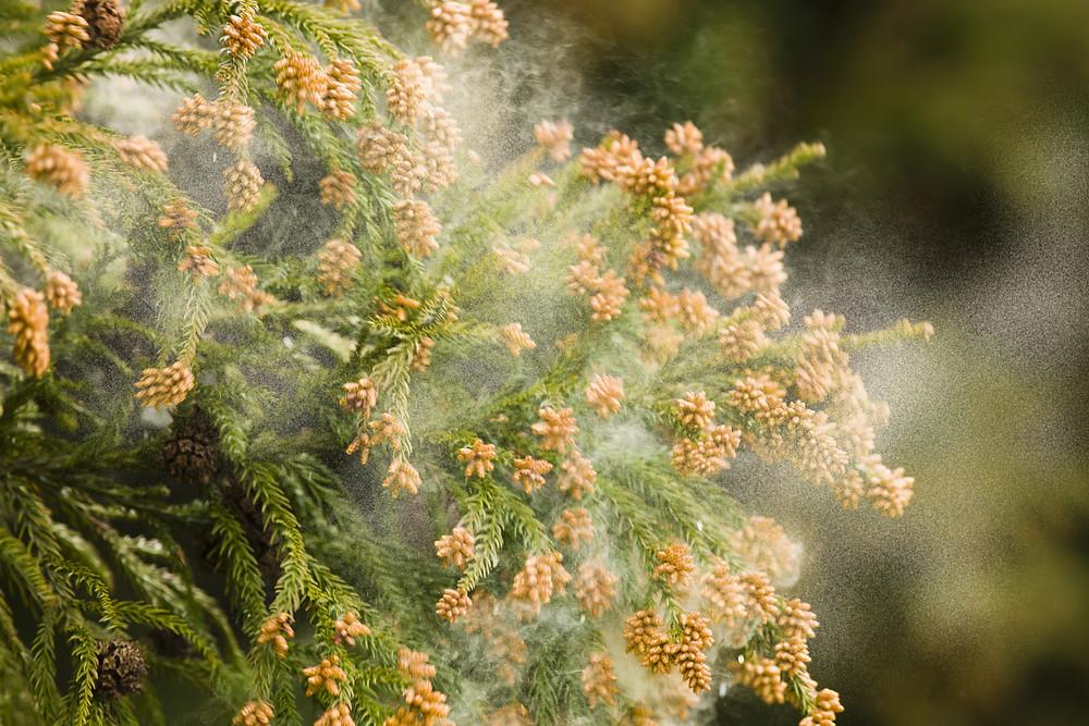 漆喰による調湿効果により、花粉の飛散を抑えてくれます